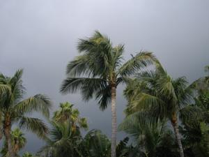 Miami Sound Diary